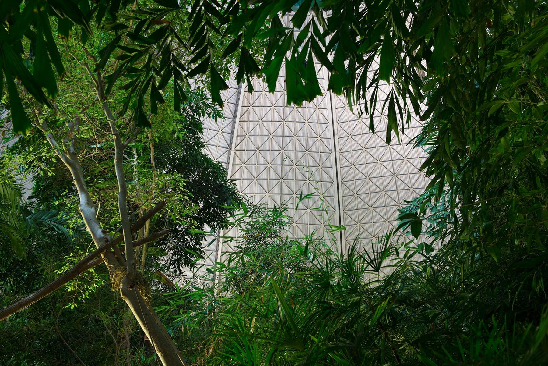 Tropical Rainforest #1, 2013